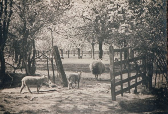 Photograph of cherry orchard at Seeleys Farm