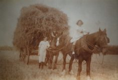 Copy of sepia photograph of haymaking at Overs Farm