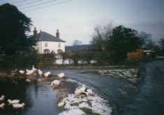 Photograph of Castleman's Farm pond and ducks and geese