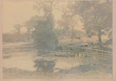 Candlemas Lane Pond