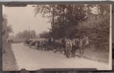 Sepia photo, mounted on card, of horse-drawn timber wagon