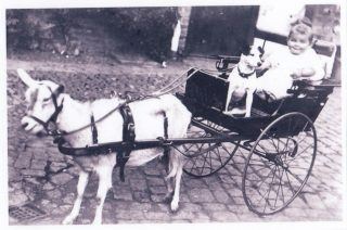 Goat cart at the swan with Mollie and 'Dinky' c1915   Marsh family